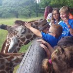 B2 Camp - Zoo giraffe
